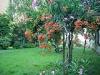 Location per eventi Il giardino in città