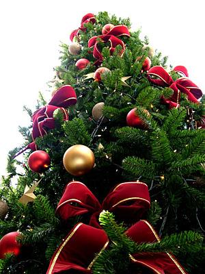 Albero Di Natale 5 Mt.Noleggio Albero Di Natale Ecologico 3 5 Mt A Milano