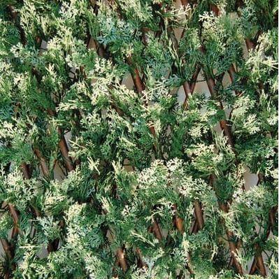 Noleggio piante siepi lauro nobilis alloro a milano for Siepe di alloro