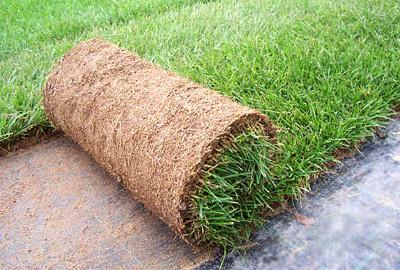 noleggio tappeto erba vera a milano
